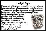 Schnauzer Dog Pet Memorial Fridge Magnet with verse - Lucky Dog