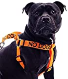 NO DOGS (Not good with other dogs) Orange Colour Coded Non Pull L-XL