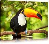 Exotischer Tukan Format: 100x70 auf Leinwand, XXL riesige Bilder fertig gerahmt mit Keilrahmen, Kunstdruck auf Wandbild mit Rahmen, günstiger als Gemälde oder Ölbild, kein Poster oder Plakat