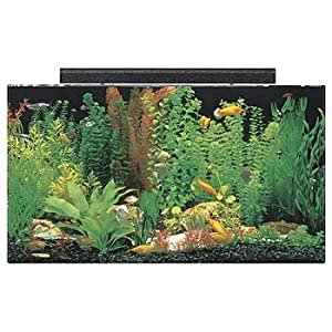 SeaClear 50 gal Acrylic Aquarium Combo Set, 36 by 15 by 20″, Clear