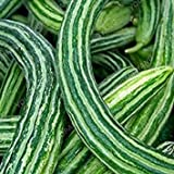 VISTARIC Acquista Viola Asparagi Vegetable Seeds 60pcs Piante Buds Verdure Asparagus officinalis