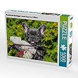 CALVENDO Puzzle Französische Bulldogge - Kleiner Clown auf 4 Pfoten 1000 Teile Lege-Größe 64 x 48 cm Foto-Puzzle Bild von Sigrid Starick