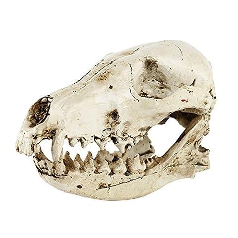Harz Fuchs Schädel Kopf Figur Skelett Medizinische Lehr Modell für Sammlung - Antique White