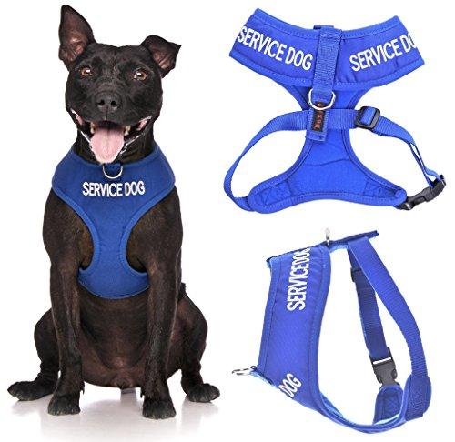 Service Hund (Do Not Disturb/Hund ist Arbeiten) blau Farbe Kodiert non-pull Vorder- und Rückseite D-Ring gepolstert und wasserdicht Weste Hundegeschirr verhindert Unfälle durch vorwarnen anderer Hunde in Advance (große Hals bis 43cm Brust 48-72cm) (Service-hund Mantel)