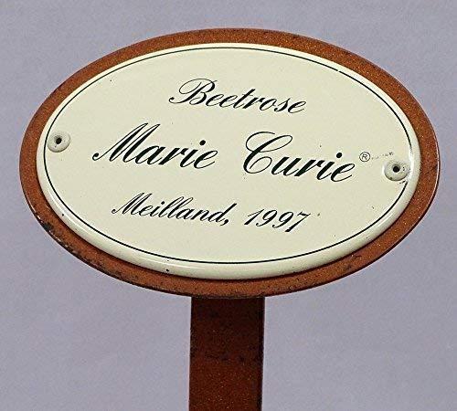 linoows Rosenschild, Rosenstecker Emaille, Beetrose: Marie Curie, Meilland 1997
