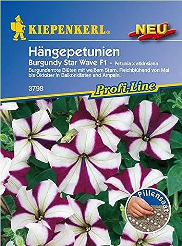 Blumen Burgundy Star Wave F1, Pillensaat Petunia-Hybriden