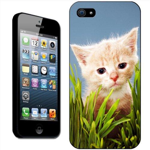 Chatons Coque arrière rigide détachable pour Apple iPhone modèles, plastique, Cute Kittens In Christmas Hat, iPhone 5C Cute Kitten Sat In Green Grass