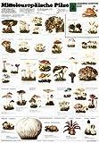 Mitteleuropäische Pilze 2: Schreiber Naturtafeln, Mitteleuropäische Pilze - Hanns Feustel, Hermann Fay