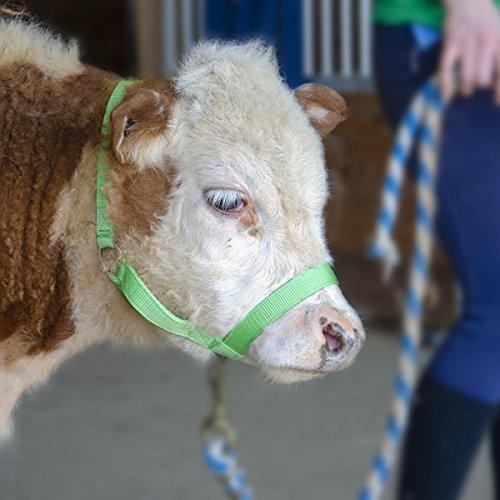 RopeServices UK 14 Mm Rope Cattle Show Halter Black