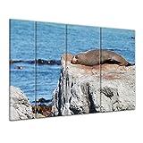 Keilrahmenbild - Robbe auf einem Felsen - 180x120 cm 4tlg - Bilder als Leinwanddruck - Wandbild von Bilderdepot24 - Tierwelten - Meeresbewohner - Kegelrobbe an der Küste