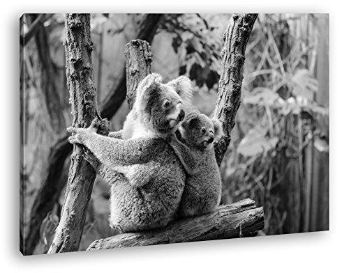 Simpatico koala madre con il suo bambino effetto: nero/bianco come immagine su tela, motivo: barella su cornice in vero legno, stampa digitale di alta qualità con cornice, non un manifesto o poster, stampa su tela, bianco, 100x70