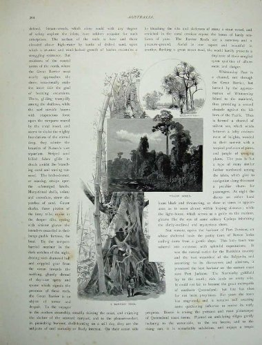 1886-australia-sugar-industry-mackay-virgin-scrub-tree