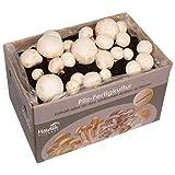 Hawlik Pilzbrut - das Orginal - weiße Champignon Pilz-Zuchtset - Kultur zum...