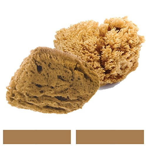 Natural Intimacy Intimate Sea Sponges Unbleached
