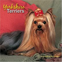 Yorkshire Terriers 2008 Wall Calendar