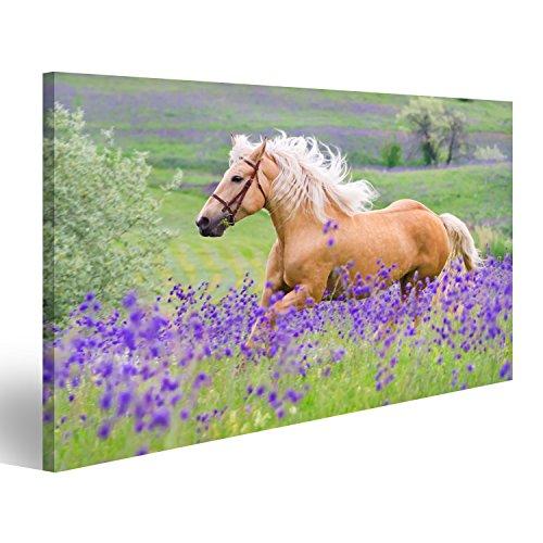 islandburner Bild auf Leinwand Palomino Pferd mit Langen blonden Mann auf Blumenfeld Wandbild, Poster, Leinwandbild Gay