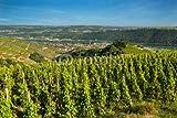adrium Alu-Dibond-Bild 30 x 20 cm: vignoble de la vallée du Rhône France, Bild auf Alu-Dibond