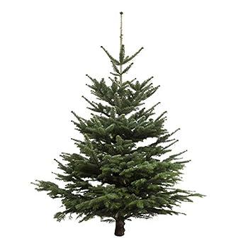 Dominik Blumen Und Pflanzen, Weihnachtsbaum Nordmanntanne, Ca. 145 - 160 Cm Hoch, Geschlagen 0