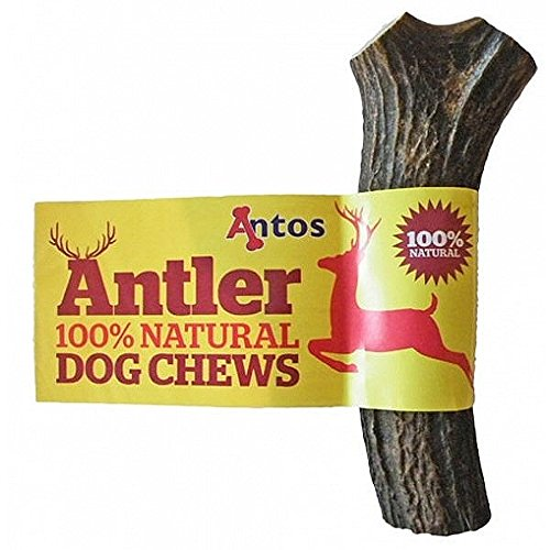 antos-antler-natural-dog-chew-large