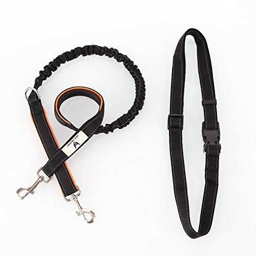 new-journey-hands-free-dog-leash-double-handle-retractable-shock-absorbing-bungeereflective-stitchin