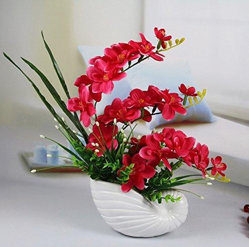 Schmetterlingsorchidee 12 cm