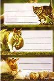 Katzenbabys Schuletiketten