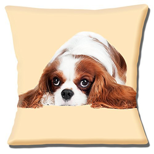 Cute tan Brown White Cavalier King Charles