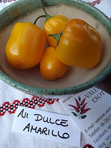 AGROBITS Aji Dulce Amarillo Cli - 5 + - duftend und gut!