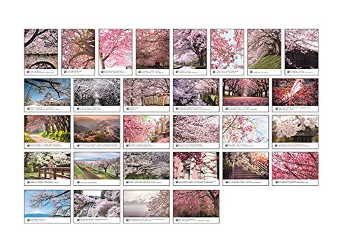 Postal romántica hermosa de la flor de cerezo del estilo japonés 30 PC