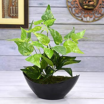 Fancy Mart Synthetic Cloth, Wood & PVC Artificial Green Leaves Plant with Boat Shape PVC Black Pot (Standard, Green)