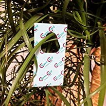 ChrysoCards - 600 Stück Florfliegeneier auf Hängekärtchen - Nützlinge