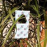ChrysoCards - 600 Stück Florfliegeneier auf...