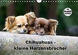 Chihuahuas - kleine Herzensbrecher (Wandkalender 2019 DIN A4 quer): Wunderschöne Outdoor Fotos der kleinen Hunderasse (Geburtstagskalender, 14 Seiten ) (CALVENDO Tiere)