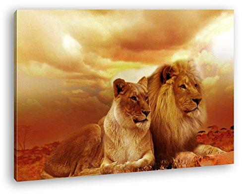 deyoli Löwen in Afrika im Format: 120x80 als Leinwandbild, Motiv fertig gerahmt auf Echtholzrahmen, Hochwertiger Digitaldruck mit Rahmen, Kein Poster oder Plakat (Bilder Adler)