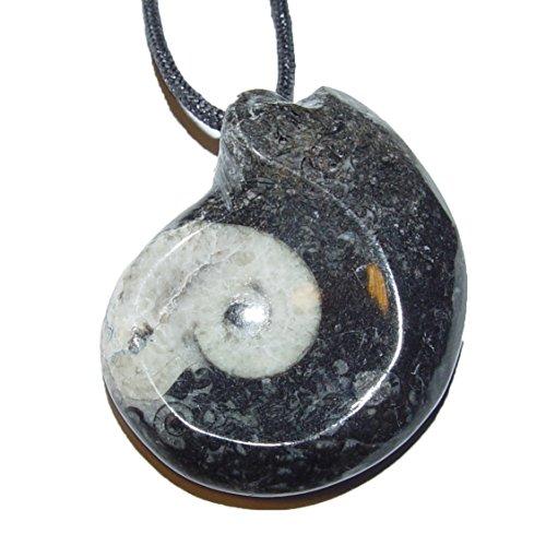Goniatit Anhänger groß versteinertes Fossil (Ammonit) fossiles Gehäuse eines Kopffüßlers ca. 360 Millionen Jahre alt ca. 35-40 mm.incl. Band (4674)