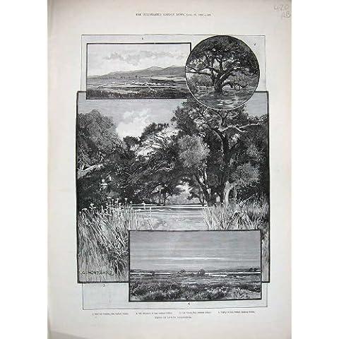 Sigillo 1888 di Caccia del Ribassista di Canon del Monarca di California America - America Del Sigillo