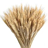 HUAESIN 100 Pcs Dry Wheat Grass Bouquet Natural Wheat Dried Grasses Bundle Wheat Grass Dried Artificial Flowers DIY Home Kitchen Church Table Wedding Centerpieces Decorations