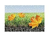 Compo 1096966004 Herbst Rasendünger mit Langzeitwirkung, 5 kg - 6