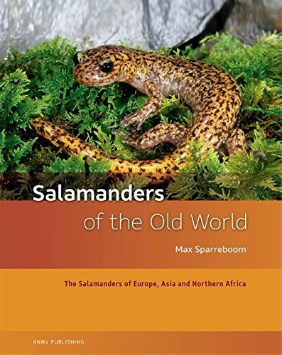 Salamanders of the Old World: The Salamanders of Europe, Asia and Northern Africa by Max Sparreboom (2014-09-08)