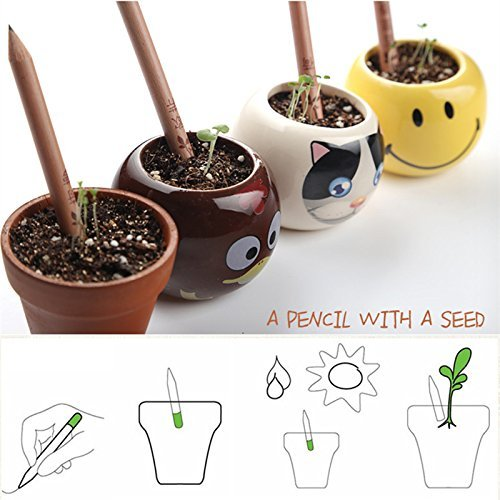 Fabsouk 2B Environment friendly Plantable Pencil with seeds (Pack of 10) with Box for office use, kids and stationary   Perfect for Return Gifts  Pots not included