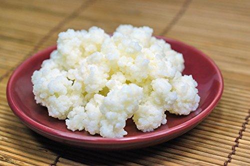 10g Bio-Milchkefir-Körner, Tibetische Pilze, Schneelotus
