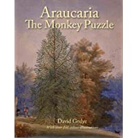 Araucaria The Monkey Puzzle