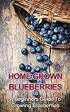 Home Grown Blueberries: A Beginners Guide To Growing Blueberries (beginners gardening, home grown berries, backyard berries, garden design, urban farming, organic fruit, growing berries)