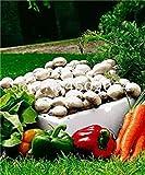 Potseed . 200 Pezzi Delicious Champignon Verde Verdura Organico Sano vegetali commestibili delle Piante in Giardino e Interna: 15