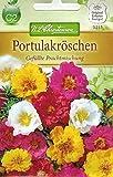 Chrestensen Portulakröschen 'Gefüllte Prachtmischung'