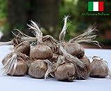 Bulbi di Zafferano ITALIANO - DISPONIBILITA' IMMEDIATA - 7/9 cm...