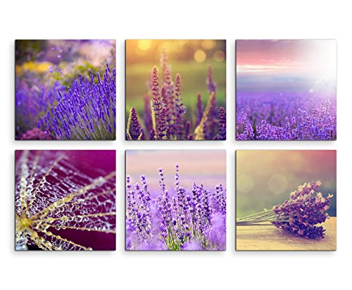 6 teilige moderne Bilderserie je 20x20cm - Lavendel Blumen Spinnennetz ()