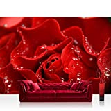 Fototapete Blumen - ALLE BLUMENMOTIVE auf einen Blick ! Vlies PREMIUM PLUS - 400x280 cm - A PERFECT ROSE - Blumen Rose B