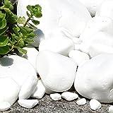 MGS SHOP Marmorkies Snow rein weiß schneeweisser Garten Kies 25 kg (40/80 mm) - 5