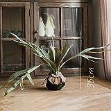 ZHUDJ Großen Geweih Farn Gras Künstliche Blumen Dekoration Tropischen Pflanzen Grün-Shik Wand Landschaftsgestaltung Angezeigt, Das Geweih Farn Moos Kugel